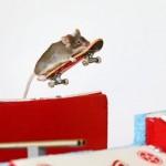 Skateboarding mouse