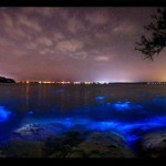 Glowing waves of bioluminescent microorganisms