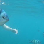 Well-timed photo gives allusion of fish with human arms