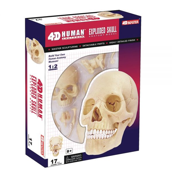 Realistic (and sort of creepy) 4D Human Anatomy Exploded Skull Model