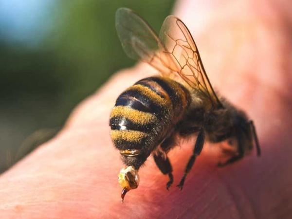 bee stinging arm