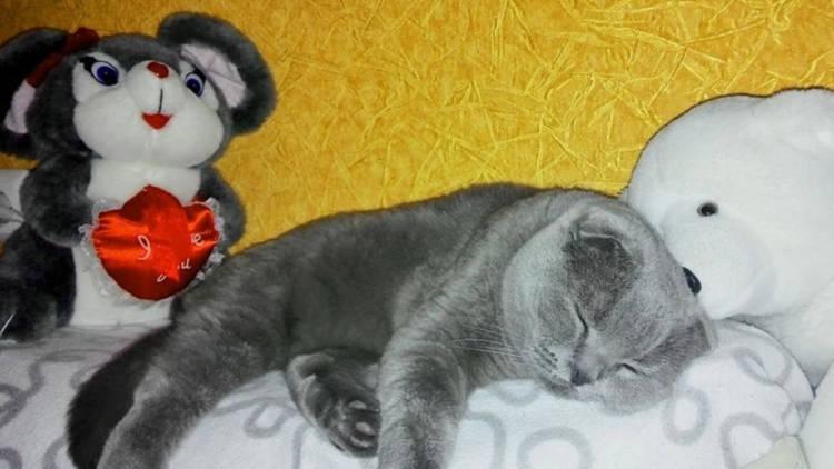 magical cat2